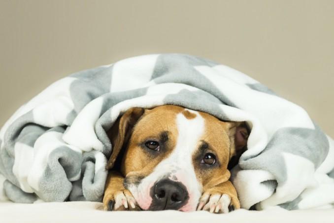 cane, diarrea, rimedi naturali efficaci