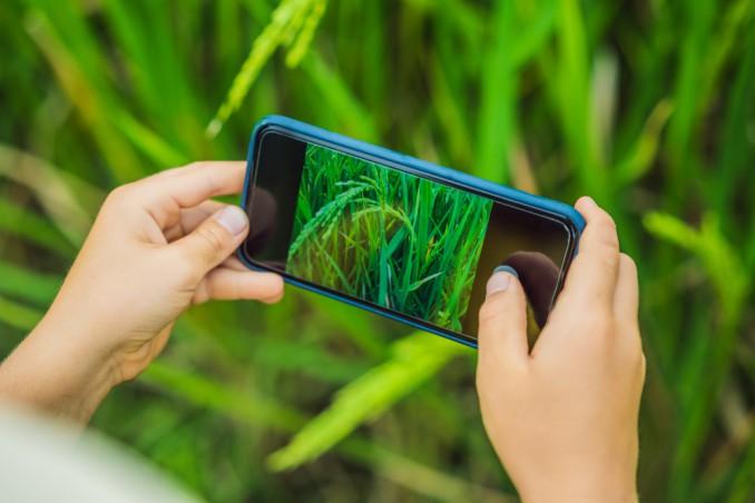 app riconoscimento piante