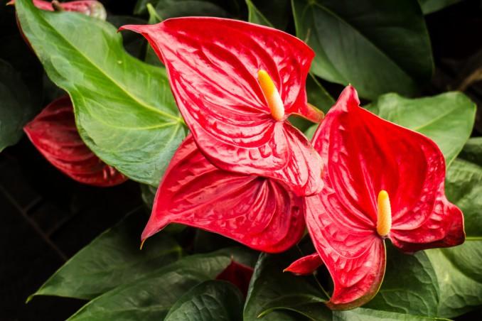 come creare ambiente umido piante, umidificare piante