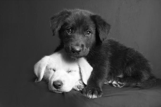 sognare, cane bianco o nero, interpretazione sogno