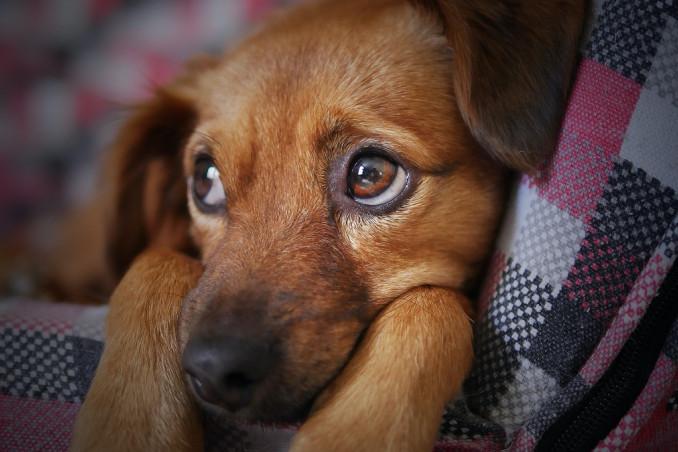 cucciolo, tremore, cause