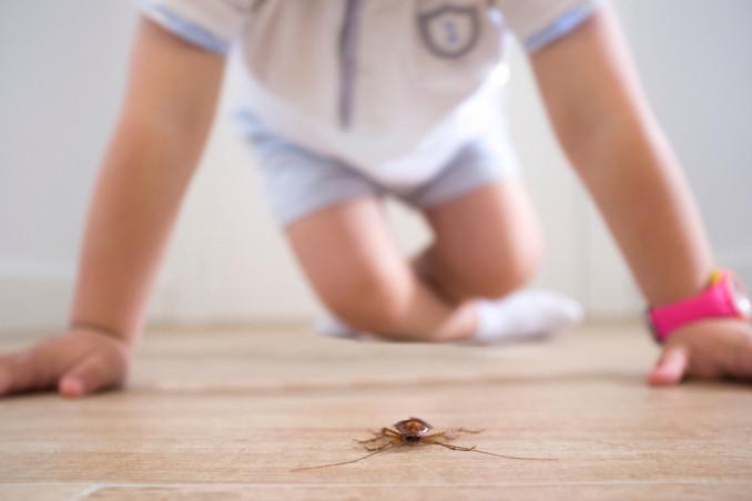 Bambino e insetti