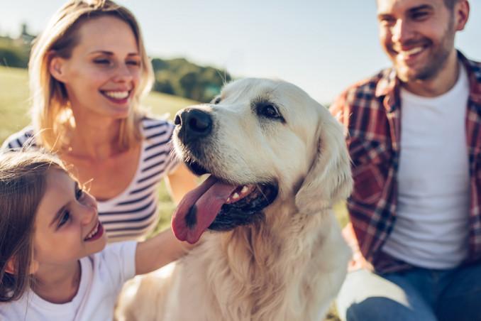 cani per famiglia
