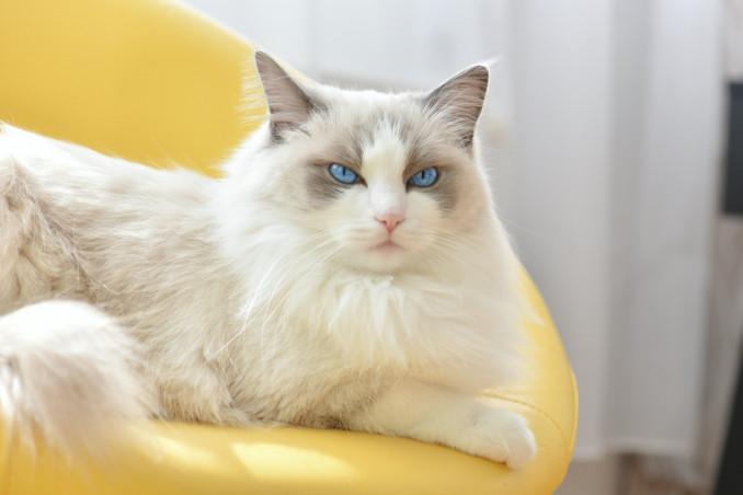 sognare, gatti, significato