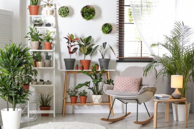 curare piante appartamento inverno, curare piante interno inverno