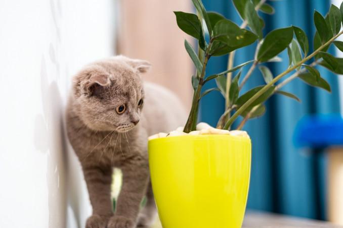 piante, pericolo, gatto