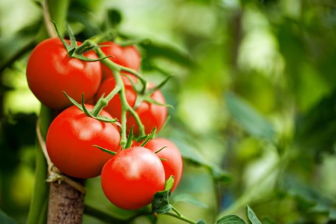 sognare, pomodori, significato