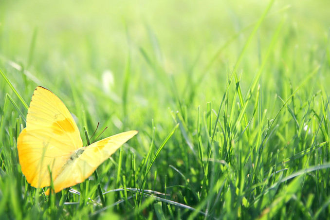 liliana segre frasi, giornata memoria frasi