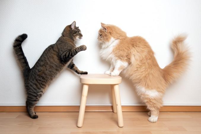 gatti, liti, territorio