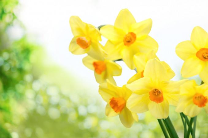 fiori gialli terrazza