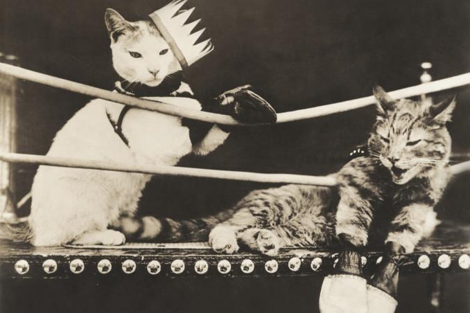 gatti, litigano, sogno
