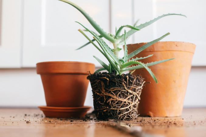 come pulire vasi terracotta, pulizia vasi terracotta