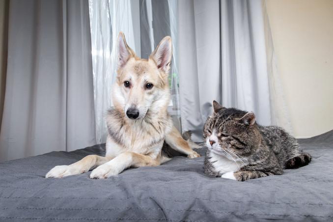 gatti cani frasi