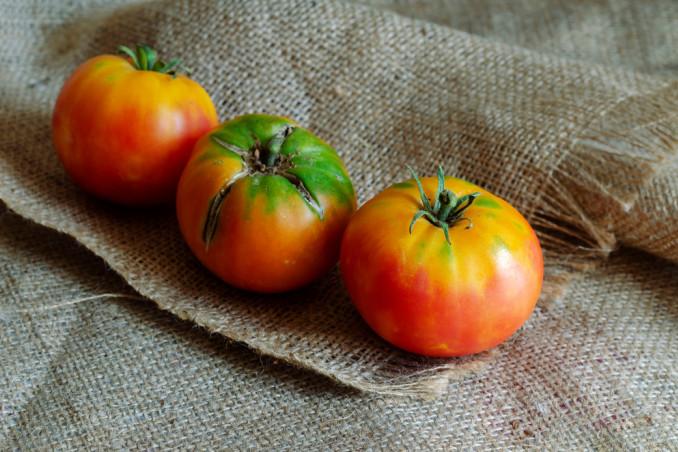 come coltivare pomodori sacco, coltivazione pomodori sacco