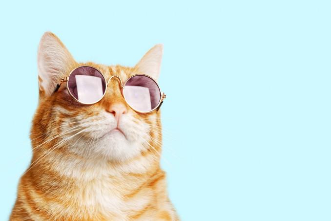Quante vite hanno i gatti