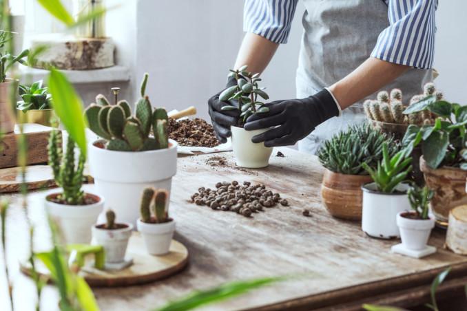 piante grasse tipi, piante grasse famiglie