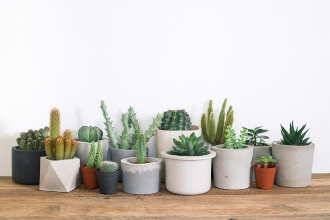 Terriccio per cactus