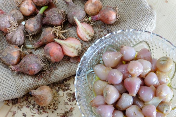 lampasioni, conserve, Puglia