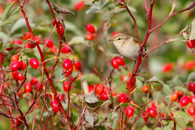 piante attirano uccelli