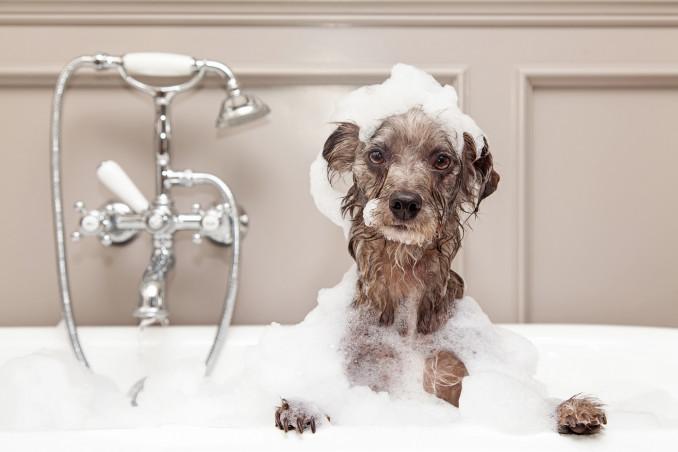 Ogni quanto tempo lavare il cane