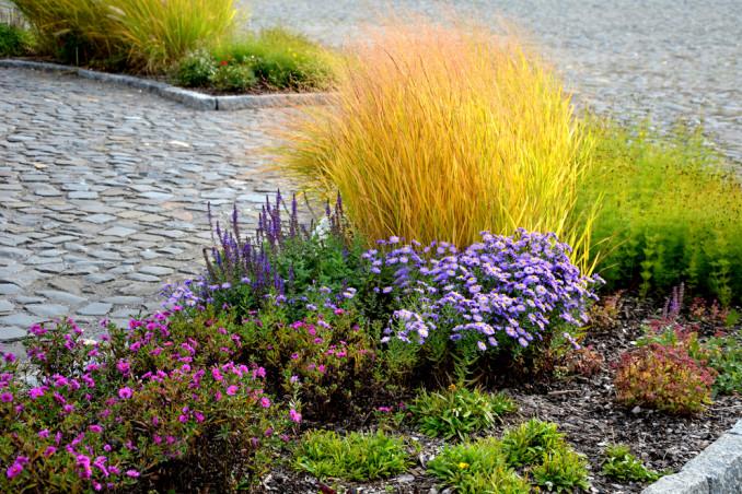 piante autunnali da esterno, piante autunno da esterno