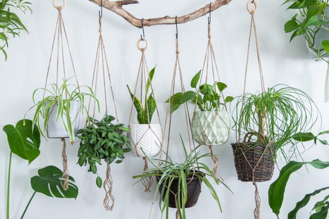 piante pensili